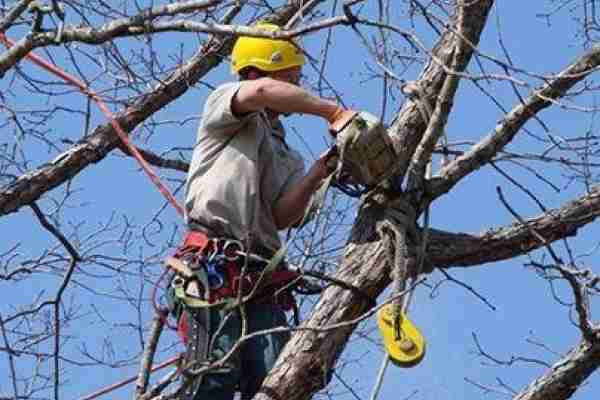 Tree Surgery/Arboriculture